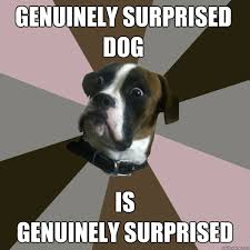 Genuinely Surprised Dog memes | quickmeme via Relatably.com