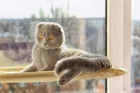 The 25 Best <b>Cat Window</b> Perches and Beds of 2019 - <b>Cat</b> Life Today