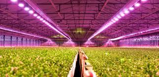 horticulture lighting