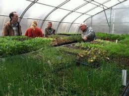 Growing <b>organic cut</b> flowers | Northeast <b>Organic</b> Farming ...