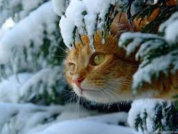 Free Wallpaper Winter Cat (Page 6 ...