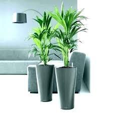 cement plant pots silver plant pots plant pots indoor designer indoor plant pots indoor plant holders cement plant pots