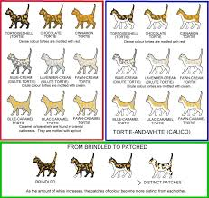Tabby Patterns Stunning Colour And Coat Genetics In Cats Cats From Your Wildest Dreams