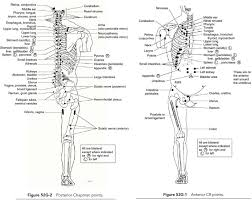 Relationship Between Chapmans Reflexes And Acupuncture