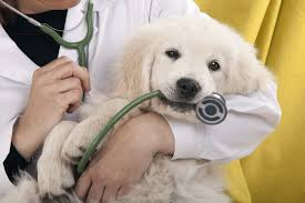 24+ Resources for Free or Low Cost Veterinary Care • Low Income Relief