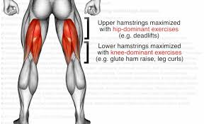 Lower Body Leg Workout Exercises And Routines For The Gym