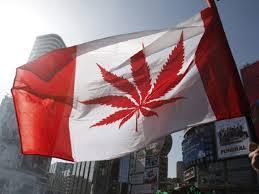 Výsledek obrázku pro kanada legalizace