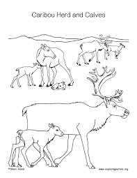 Small Picture Caribou and Calf Coloring Page