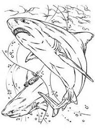 Small Picture Bull Shark Jaws Coloring Pages Bull Shark Jaws Coloring Pages