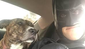 Guy Dressed As Batman Has Rescued Dozens Of Shelter Pets From Euthanasia