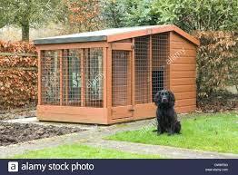 outdoor dog kennel ideas medium size of build outdoor dog kennel how to build a indoor