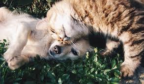 30,000+ Free Pet & Cat Images - Pixabay