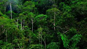 Free download Jungle Forest HD ...