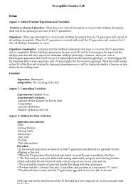 drosophila lab report dominance genetics zygosity