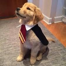 diy harry potter dog costume idea