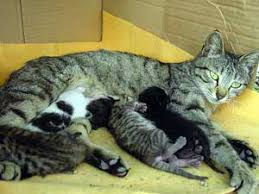 what s so great about the mother cats milk