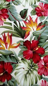 Pinterest Tropical Ipad Wallpaper