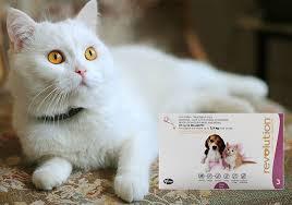 Is It Safe To Use Dog Revolution Dosage On Cat Bestvetcare