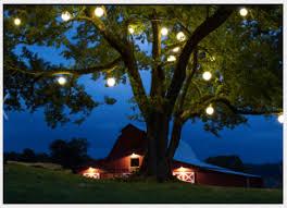 tree lighting ideas. Tree Lighting Techniques Ideas