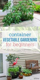 Kitchen Gardening For Beginners 17 Best Ideas About Container Vegetable Gardening On Pinterest