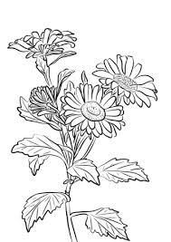 Callistephus Kleurplaat Gratis Kleurplaten Printen
