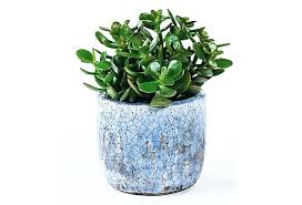 best office plant no sunlight. desk small plants for office singapore and the best kinds of are plant no sunlight