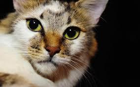 cat eyes wallpaper animals