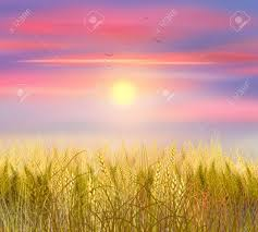 grass field sunrise. Wonderful Field Stock Photo  Wheat Field Sunrise Sky Clouds And Sun Background Sun Rays  On Horizon Painting World Environment Day Ecology For Grass Field Sunrise