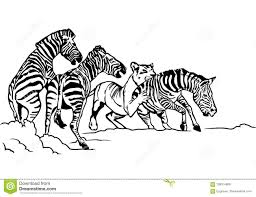 lioness hunting drawing. Interesting Drawing Lioness Hunting Zebra Illustration With Hunting Drawing R