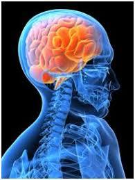 Центральная нервная система Факторы риска и профилактика  Центральная нервная система