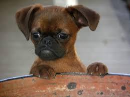 """Résultat de recherche d'images pour """"jolie photo petit chien"""""""