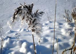 """Attēlu rezultāti vaicājumam """"ziemas skats"""""""