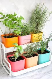 Herb Garden Make A Colorful Indoor Herb Garden A Beautiful Mess