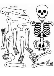 Small Picture All Human Bones in Human Anatomy Coloring Pages Bulk Color