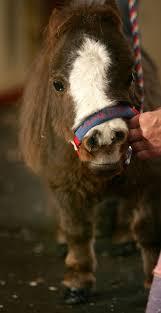 M s de 25 ideas incre bles sobre Amor del caballo en Pinterest