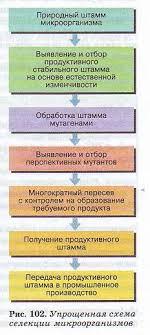 Селекция микроорганизмов Гипермаркет знаний Методы селекции микроорганизмов