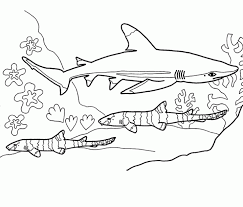 Small Picture Coloring Pages Sharks Printable Of 5715 Designpng Coloring Page