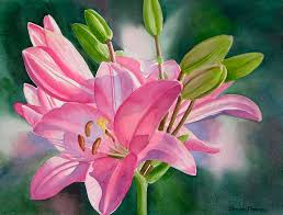 watercolor lily painting pink lily with buds by sharon freeman