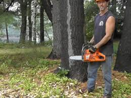cutting down trees and milling lumber greenbuildingadvisor com