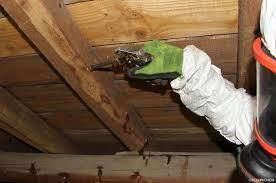 Il pourrit et perd sa solidité. Fongicide Contre La Merule Et Insecticide Insectes Xylophages