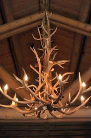 antler chandelier made from antlers that animals shed every year svqoorh