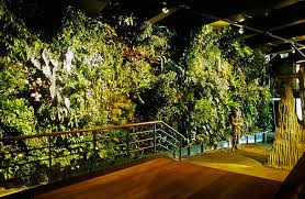 green wall lighting. patrick blanc green wall aquarium of genoa 1998 lighting