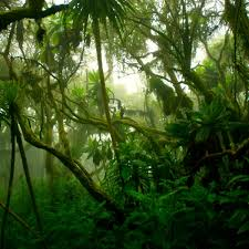 A rainforest is typically made up of four key layers: Tropical Rainforest Biome Let S Talk Science
