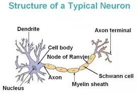 Central Nervous System Vs Peripheral Nervous System Venn Diagram What Are The Most Important Differences And Similarities Between