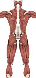 It happens when the muscular system and the nervous system work together: Anatomy Physiology Muscular System