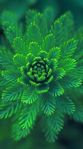 ns01-flower-green-leaf-nature-blue