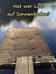 Lust Beste Sonnenbaden Lustige Bilder Lustige Sprüche Xdpediade