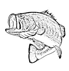 Small Picture Bass Coloring Pages Miakenasnet