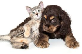 kittens and puppies hugging.  And Here Are 15 Hugs From Puppies And Kittens Inside And Hugging T