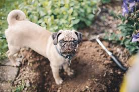 Small Picture 10 Ways to keep dogs from destroying your flowerbeds